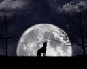 Howling_At_The_Moon_by_zanardo[1]